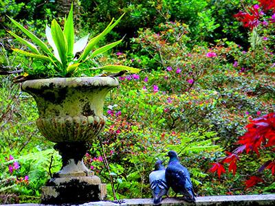 São Miguel - le somptueux Terra Nostra Garden (c) Floreesha Açores Tourisme