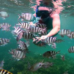 En masque et tuba à la rencontre des poissons