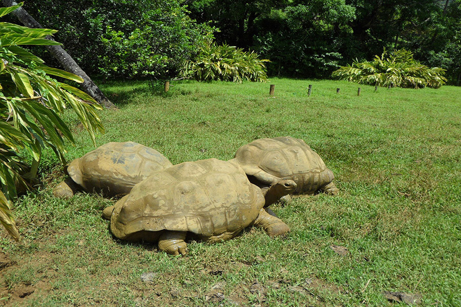 Les tortues géantes de Ferney Valley G.A.-D.