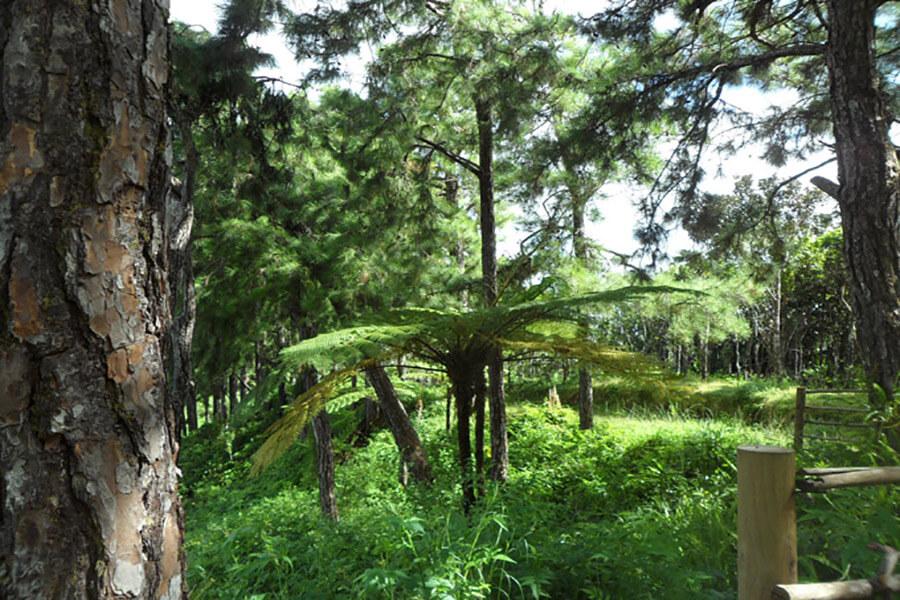 Au coeur de la végétation G.A.-D
