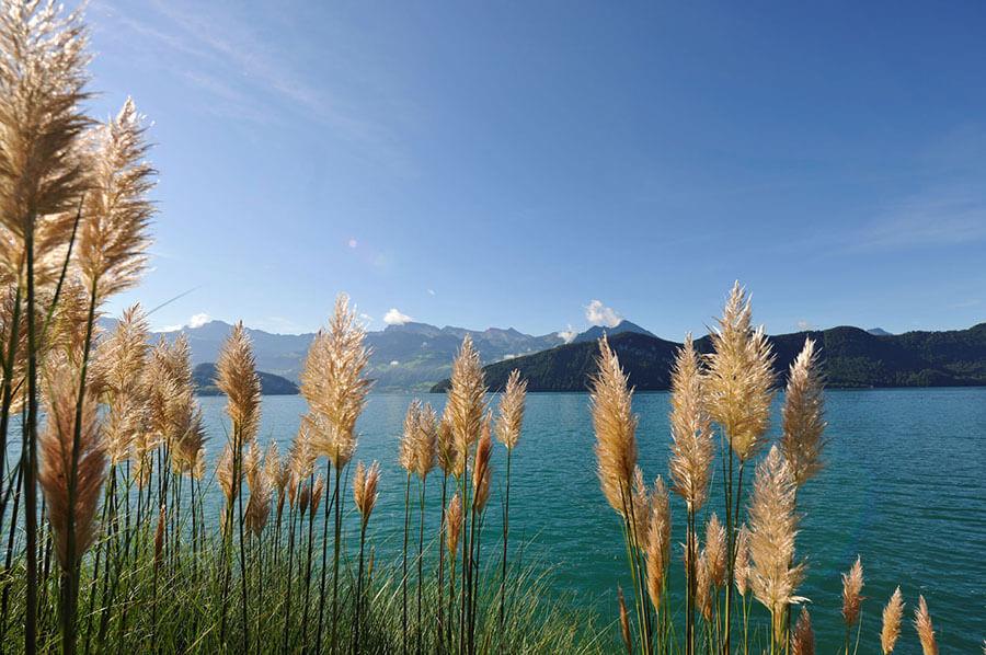 Paysage de douceur sur le Lac des Quatre Cantons
