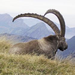 Fabuleuse rencontre avec la faune sur les hauteurs du Mont Pilate