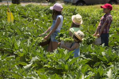 Les Jeunes Jardiniers programme de découverte