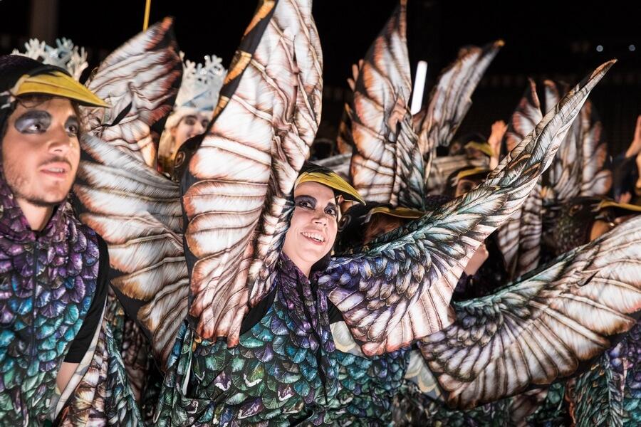 Les étourneaux dans leurs magnifiques costumes (c) Julie Masson
