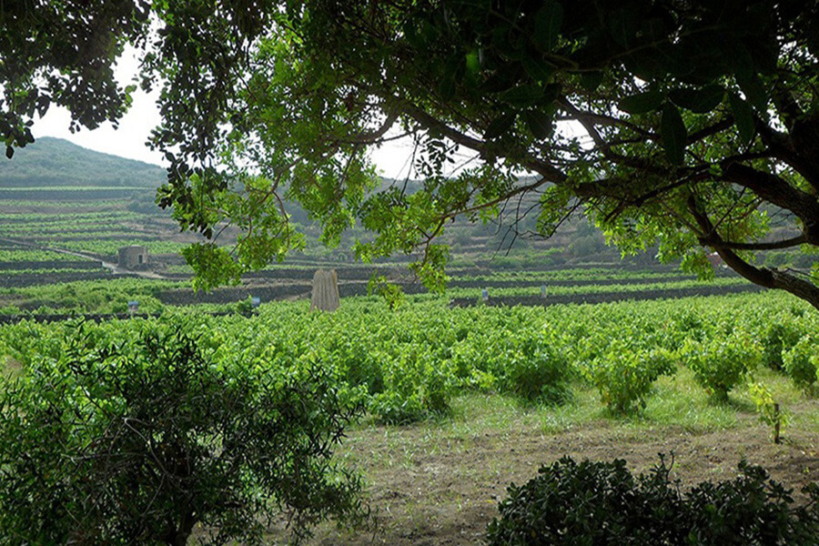 Pantelleria vue sur les vignes et les murets