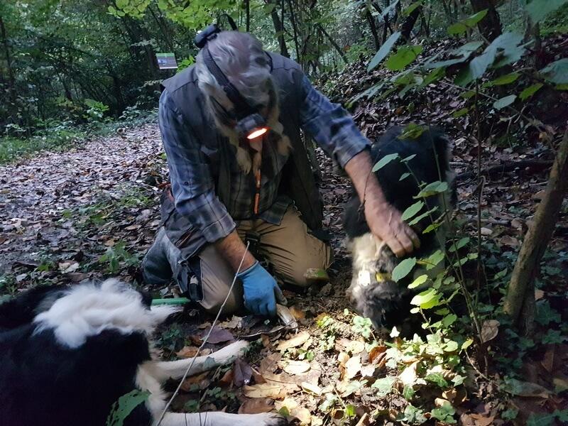 Sur la piste de la truffe, les chiens débusquent le joyau à l'instinct (c) GAD