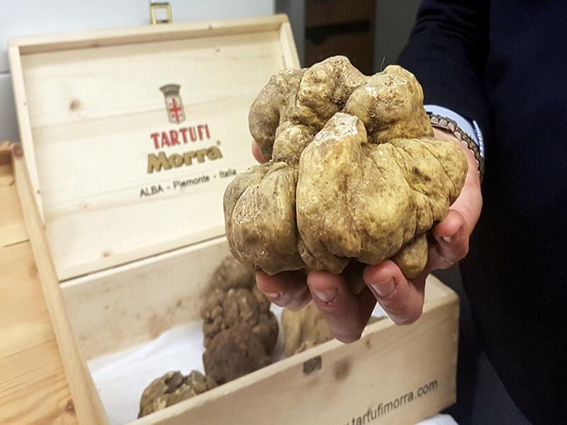 Les plus grandes truffes font l'objet de ventes aux enchères souvent en faveur d'oeuvres caritatives (c) GAD