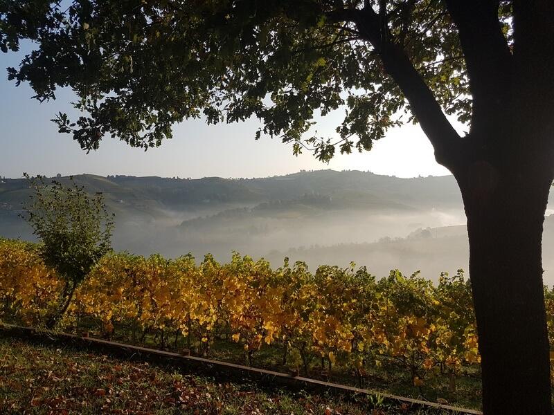 La région d'Alba est aussi celle des vins les plus réputés d'Italie
