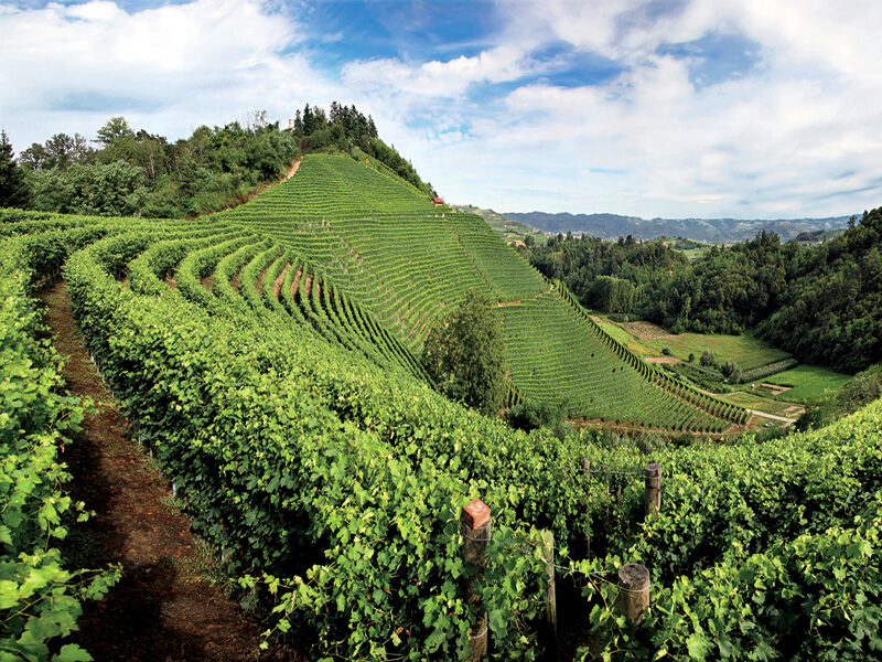 Des vignes en escaliers aux collines et bois un magnifique panorama s'étend à perte de (c) Davide-Dutto