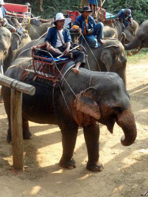 Eléphants et coolies en attente des passagers de l'Orient Express (c) GAD