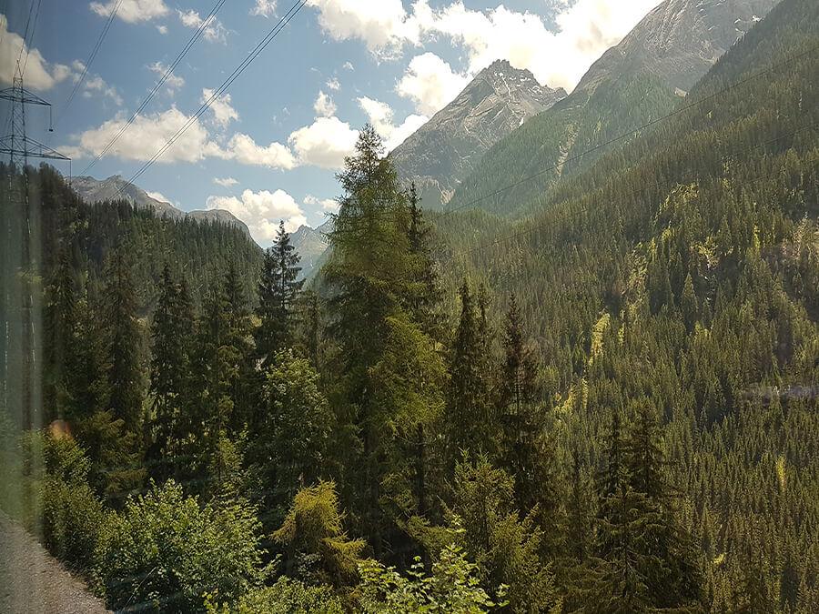 Une végétation luxuriante pour horizon dans toutes les nuances du vert (c) GAD