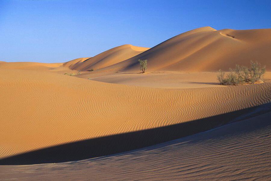 A l'infini dans la majesté blonde de l'étendue du désert (c) OT Oman