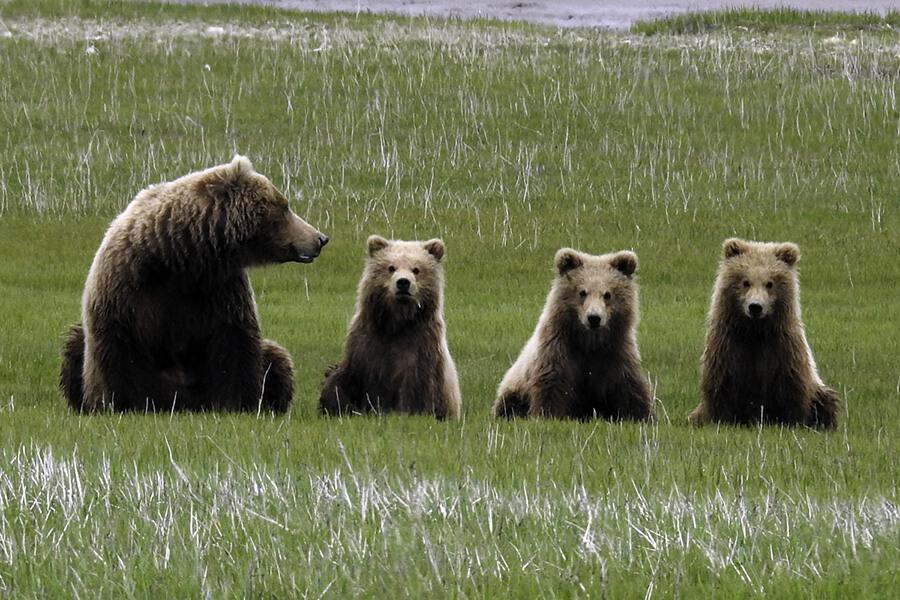 Découverte de la nature et sa faune particulière au milieu des ours Tutka-Bay-Lodge Résidence partenaire de Traveller Made(c) TM Gallery