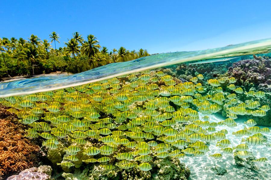 Coral-Garden Asia Pacific Le Tahaa by Pearl Resorts hôtel partenaire de Traveller Made (c) TM Gallery