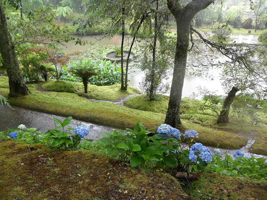 Partout les hortensias d'un bleu intense bordent les routes et chemins (c) GAD