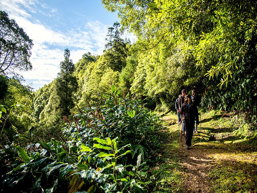 Randonnée sur les pistes au sein d'une nature à l'incroyable végétation (c) Turismo dos Açores