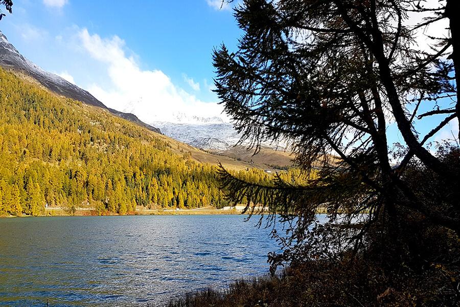 Entre le bleu des lacs , la blancheur des sommets et les forêts glissant du vert au jaune, un paysage de rêve(c) GAD