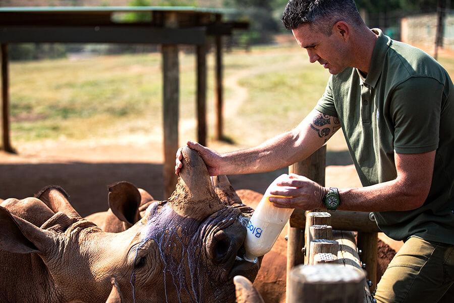 Kevin Pietersen s'occupant de ses protégés rhinocéros portant la montre Hublot Big Bang SORAI ((c) Hublot